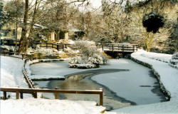 Country Park in Winter